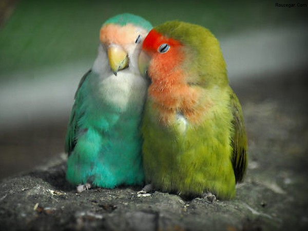 http://rouzegar.com/wp-content/uploads/2014/10/animals-being-romantic-3.jpg