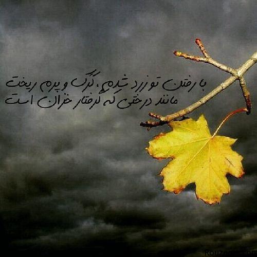 aks asheghaneh (7)