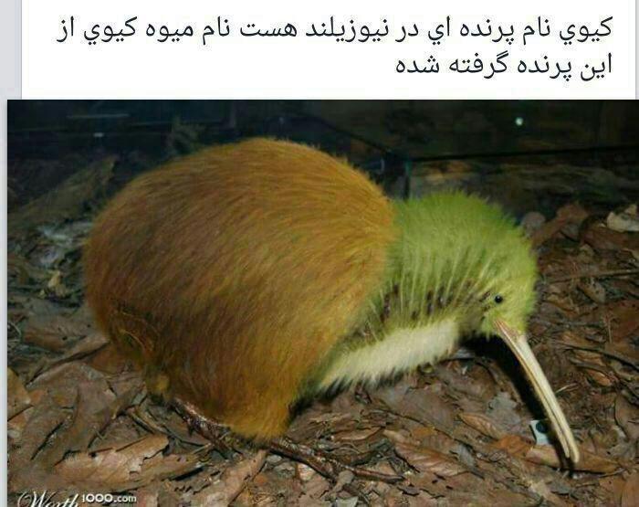 https://rouzegar.com/wp-content/uploads/2015/08/funny_telegrami_Rouzegar.com_15.jpg