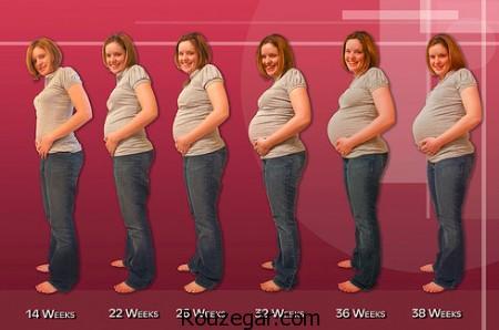 بارداری هفته به هفته,تغذیه هفته به هفته بارداری,بارداری پسر,محاسبه هفته بارداری,عکس جنین در هفته های مختلف,بارداری هفته به هفته نی نی بان,بارداري و نزديكي,عکس سونوگرافی جنین در هفته های مختلف,بارداری هفته به هفته دوقلو