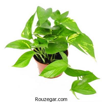آشنایی با 5 گیاه آپارتمانی و نحوه نگهداری آنها