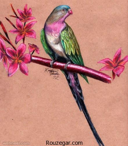 نقاشی پرندگان، نقاشی پرندگان با مداد رنگی، نقاشی پرندگان با قلم سیاه