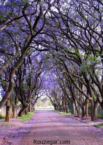 عجیب ترین ها،عجیب ترین درخت های دنیا