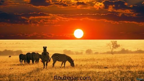 تصاویر فوقالعاده زیبا از عکس حیات وحش افریقا و آمازون