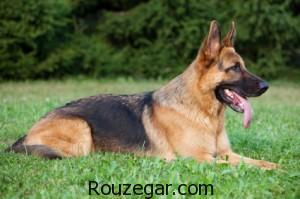 چرا سگ نجس است, چرا سگ نجس است,سگ نجس نیست,آیا سگ نجس است سیمین بهبهانی,حکم نگهداری سگ در خانه,نجاست سگ از نظر اهل سنت,چرا سگ نجس است ویکی پدیا,چرا خوک نجس است,دلیل نجس بودن خوک,نجاسات در قرآن,مساله نجاست سگ
