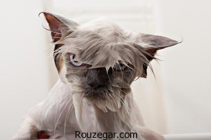چرا گربه از خیار می ترسد,گربه ها از چه چیزی میترسند,چرا گربه خرخر می کند