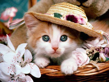 عکس گربه، عکس گربه زیبا