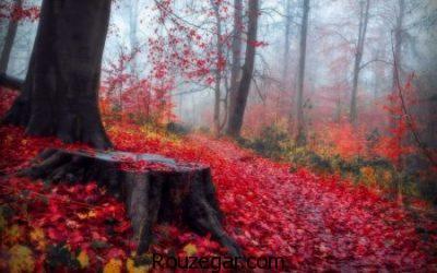 تصاویر پاییزی، تصاویر پاییزی عاشقانه،تصاویر پاییزی زیبا