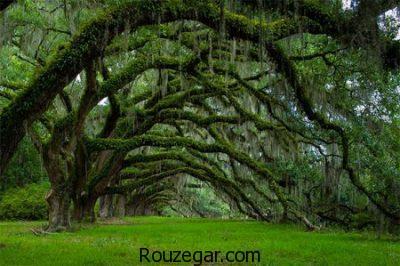عکس درختان، عکس درختان عجیب و غریب