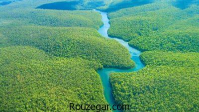 جنگل آمازون،  عکس جنگل آمازون