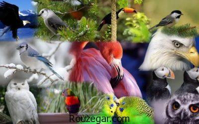 عکس پرندگان، عکس پرندگان زیبا