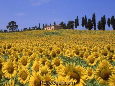 عکس مزرعه، عکس مزرعه گل