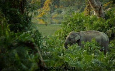 عکس از فیل، عکس فیل ها