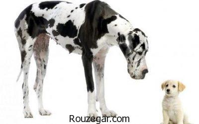 عکس از سگ ها، عکس سگ