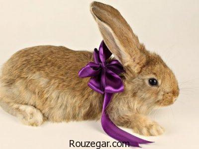 عکس خرگوش، عکس خرگوش حامله