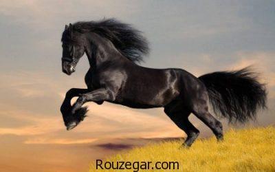 تعبیر خواب اسب,تعبیر خواب اسب سواری,تعبیر خواب سوار شدن بر روی اسب,تعبیر خواب اسب وحشی,تعبیر خواب اسب قهوه ای,تعبیر خواب خوردن اسب,تعبیر خواب اسب سیاه,تعبیر