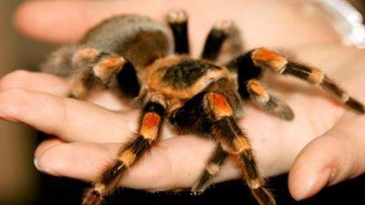 تعبیر خواب عنکبوت,تعبیرخواب کشتن عنکبوت,تعبیر خواب نیش زدن عنکبوت,تعبیر خواب کامل عنکبوت,تعبیر عنکبوت درخانه,تعبیر خواب تار عنکبوت,تعبیر عنکبوت درخواب,تعبیر