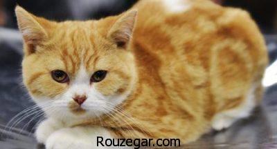 تعبیر خواب گربه,تعبیر خواب گاز گرفتن گربه,تعبیر خواب حمله گربه به انسان,تعبیر خواب گربه زرد,تعبیر خواب ترسیدن از گربه,تعبیر خواب گربه زخمی,خواب گربه مرده