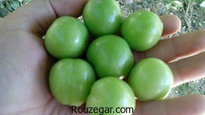 خواص گوجه سبز برای پوست,خواص گوجه سبز برای دیابت,خواص گوجه سبز برای کبد,خواص گوجه سبز در بارداری,خواص گوجه سبز