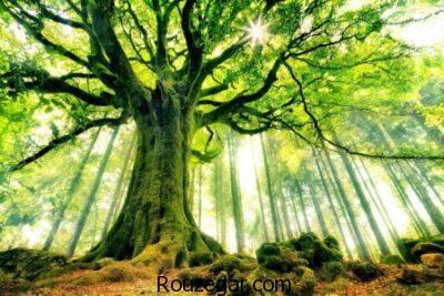 تعبیر خواب درخت,تعبیرخواب برگ درخت,تعبیرخواب درخت میوه,تعبیرخواب برگ درختان خشک,تعبیرخواب برگ درخت تازه,تعبیر خواب جمع کردن برگ درخت,تعبیر خواب درخت بی میوه
