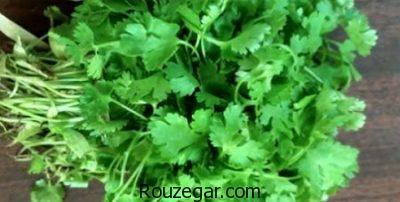 خواص گیاه گشنیز برای معده،خواص گیاه گشنیز برای مغز،خواص گیاه گشنیز برای اگزما