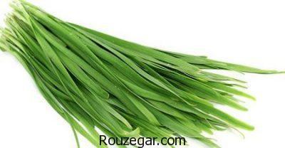 خواص گیاه تره چیست،خواصگیاه تره برای درد،گیاه تره در طب سنتی