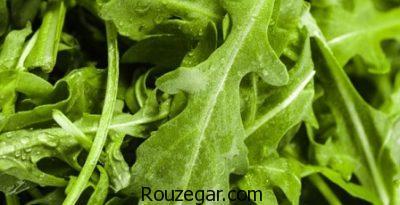 خواص گیاه منداب در کاهش وزن،خواص گیاه منداب در تقویت نیروی جنسی،خواص گیاه منداب در طب سنتی