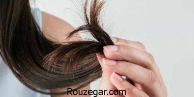 ماسک مو خانگی,طرز تهیه ماسک مو با روغن نارگیل,ماسک مو برای موهای فر