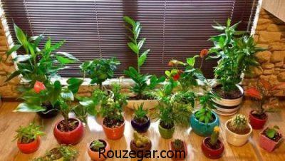 پرورش کاکتوس و ساکولنت در منزل,آموزش پرورش کاکتوس,پرورش گیاه ساکولنت