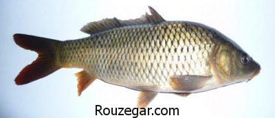 رفع بوی بد ماهی در خانه,از بین بردن بوی بد ماهی هنگام پخت,گرفتن بوی ماهی با شیر