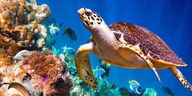 آکواریوم پوکت Phuket Aquarium