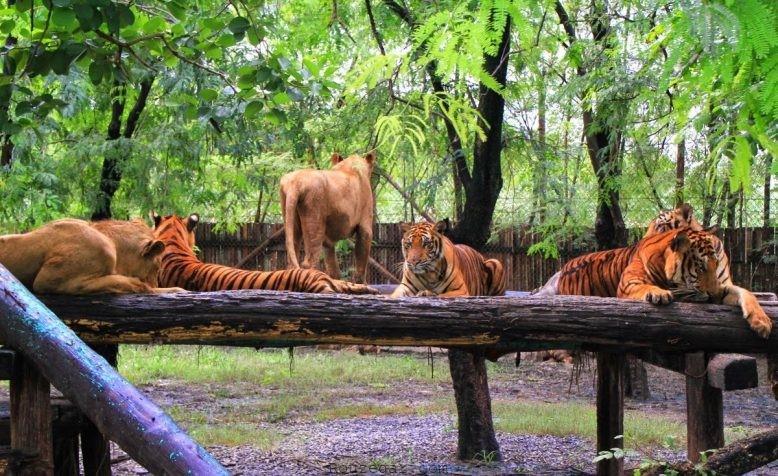 باغ وحش بانکوک