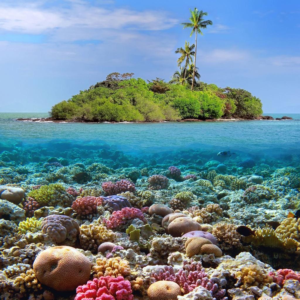 جزیره مرجانی پاتایا ( Coral Island Pattaya )