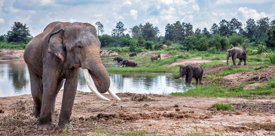 پارک ساحلی گرین الفنت Green Elephant Sanctuary Park