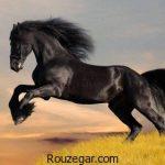 تعبیر خواب اسب + تعبیر خواب سوار شدن بر روی اسب و تعبیر خواب اسب وحشی