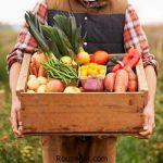 توصیه میشود روزانه چند وعده میوه بخوریم