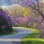 زیباترین عکس از جاده ها با مناظر زیبا و رویایی