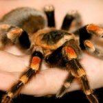 تعبیر خواب عنکبوت + تعبیر خواب نیش زدن عنکبوت و تعبیر خواب کشتن عنکبوت