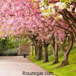 بی نظیرترین تصاویر بهاری با شکوفه های زیبای درختان در جهان
