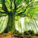 تعبیر خواب درخت + تعبیر خواب برگ درخت و تعبیر خواب درخت میوه
