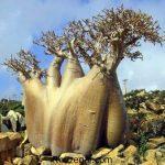 زیباترین عکس درختان عجیب و غریب در دنیا