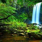 حقایق جنگل آمازون و شگفتی های جالب درباره آن