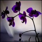 گلهای زیبا و عاشقانه برای هدیه به عزیزان