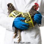 با رعایت این نکات خطر ابتلا به آنفلونزای مرغی را کاهش دهید!