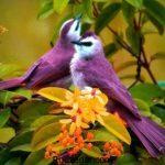 انواع عکس پرندگان زیبا و کمیاب در سرایر دنیا