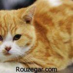 تعبیر خواب گربه سیاه و زرد + تعبیر خواب حمله گربه وحشی به انسان
