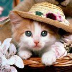 انواع زیباترین عکس گربه ملوس و دوست داشتنی ایرانی و خارجی