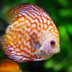 عکس ماهی و والپیپر بسیار زیبا از انواع ماهی ها در جهان