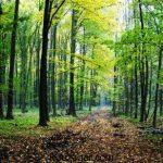 زیباترین عکس جنگل های دیدنی و شگفت انگیز در سراسر دنیا