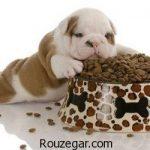 غذای سگ خشک خانگی و هاسکی چیست
